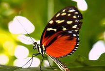 Butterfly and Moth / Butterflies