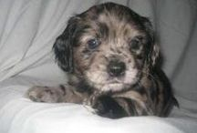 Our puppies / ~A gallery of the puppies we have worked so hard to give a better life...