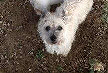 Our small dogs / ~A gallery of the small dogs we have worked so hard to give a better life...