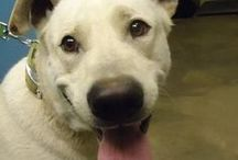 Our large dogs / ~A gallery of the large dogs we have worked so hard to give a better life...
