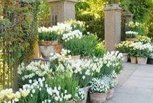 pots and patios