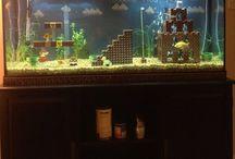 Fish Reality