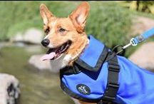 The Rein Coat / The therapeutic calming coat for the discerning dog.
