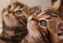 Sweet Little Kittens / Sweeties