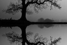 Life is a reflection / What you seek is seeking you