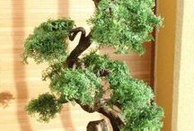 Cedar Tree Bonsai Zokei / Bonsai Tree Zokei made to individual order by the customer. Drzewko Bonsai Zokei wykonane na indywidualne zlecenie wg życzenia klienta.