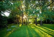 Garden & Landscapes