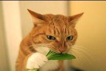 Inspiration for plant based diet