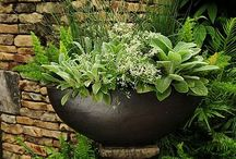 LIFESTYLE GARDENS / Your Outdoor Room