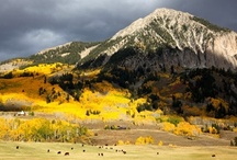 fall pics of Crested Butte / my favorite season - fall in crested butte!
