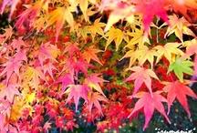 ♥Red♥ / http://ameblo.jp/izumin827/
