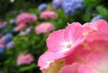 ♥Every color of the rainbow♥ / http://ameblo.jp/izumin827/