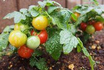 ♥Vegetable gardening♥ / http://ameblo.jp/izumin827/