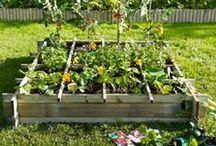 Jardin : déco et organisation