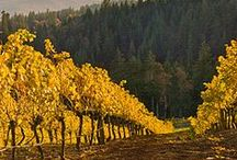 Harvest Love / Representing a favorite time of the year in OR wine country.  Think of grape harvests, apple pie, pumpkin spices and beautiful Thanksgiving tables.