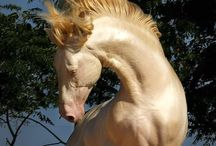 Animals - strange beautiful nature