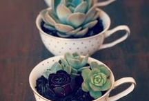 DIY Decor: Plants & Gardening / DIY your way to a green thumb. And uber cool ways to show off what you've grown.