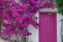 pink,Purple