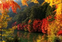 Fall / Fall in to Autum / by Kelley Wilbanks