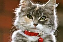 Meow / Cute cat photos.
