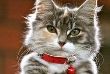Meow / Cute cat photos.
