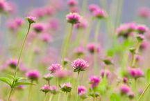 Meadow / by Tina Liddie