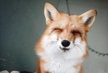 Foxytocin