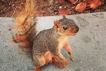 Squirrel! / Sightings of our furry friends at SJSU / by SJSU