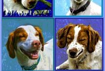 Dog Pictures by Gloria Yarina, Photographer / Stylized photos are my thing, with dogs even better!