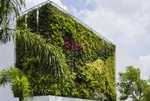 Vertical planting / Green wall