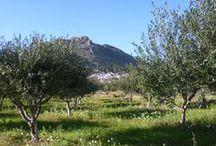 Life on a Greek Island (Tilos)