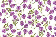 Violet / Violet things...