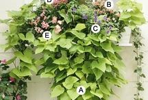 planting info