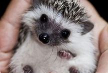 Adorable animals / Cute and funny stuff from animal kingdom