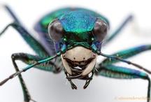 #Beetles & Bugs / I like big bugs
