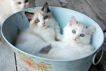 Cute Animals // Cats / Cute cats and kittens <3