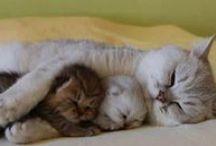 katten/kittens / schattige plaatjes van katten en kittens