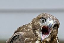 (roof)vogel / vogels