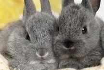 Cute Animals // Bunnies