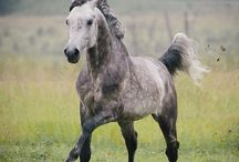 Horses / Beautiful horses and horse facts