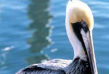 Wildlife in Key West & the Florida Keys / Key West Wildlife and wildlife in the Florida Keys / by Vacation Homes of Key West - VHKW
