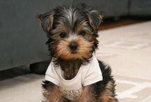 Pup pup Hooray!  / by Madison Bennett