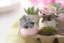 DIY: Plants & Garden
