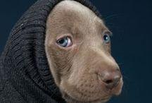 Dogs / by Georgia Susanna Scardamaglia