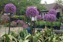 Winterberry Garden Center Spring '14 / Some pictures from around our garden center!