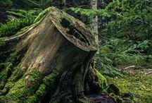 bot || nature