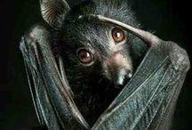 zoo || bats / | | bats, little cute creatures | |