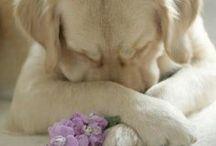 Cute pets <3 <3