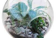 Container Gardening Inspiration / Miniature landscapes, terrariums and patio pots, Oh my! / by Westwood Gardens
