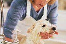diy dog spa / create an amazing spa experience for your pup, he/she deserves it! #dogspa #spa #diy #diyspa #diydog #diydogspa #diypet #crafts #home